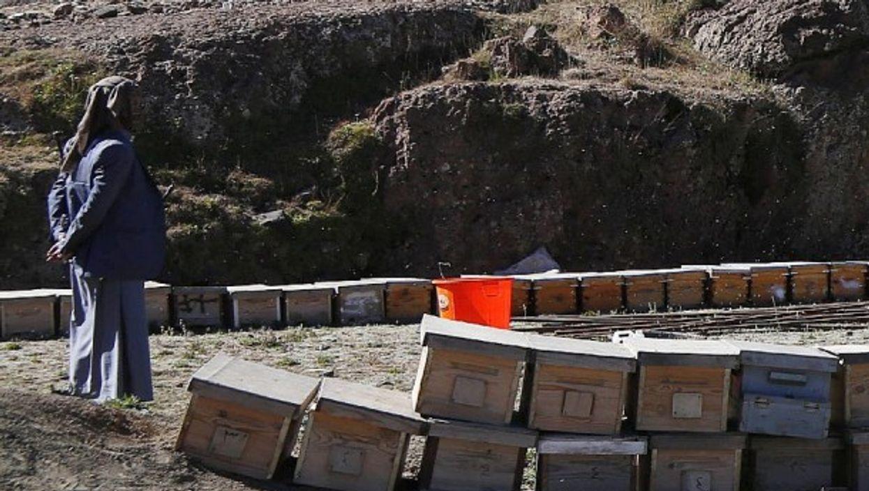 A beekeeper in Yemen in January