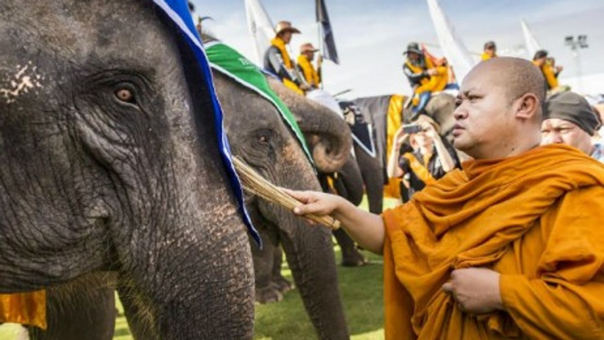 A Buddhist monk blesses an elephant before the King's Cup Elephant Polo Tournament in Bangkok.