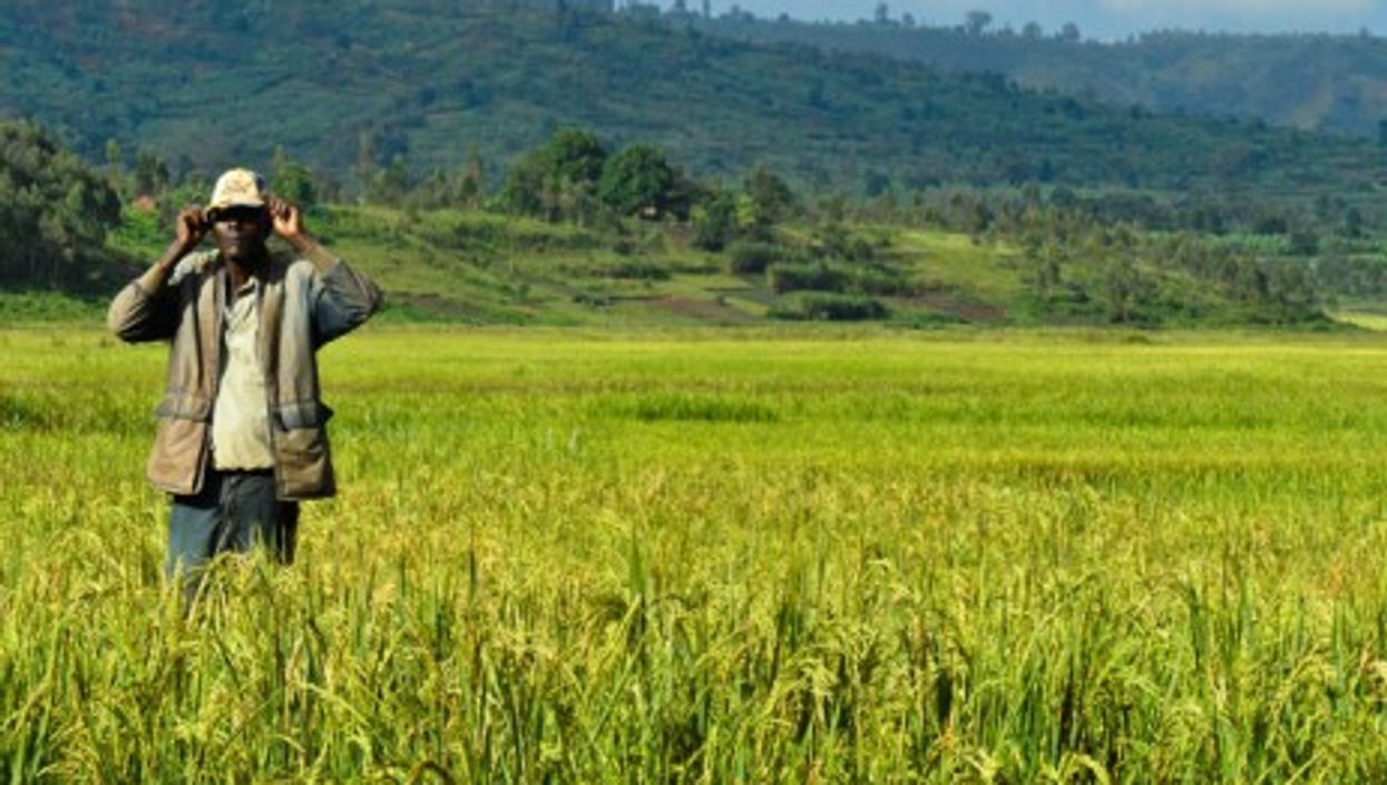 A Burundi rice farmer