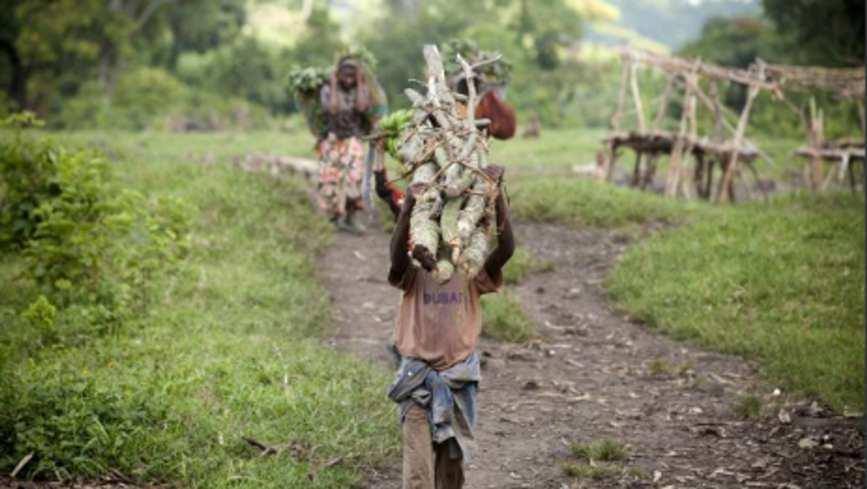 A Congolese boy carries a stack of wood (UNHCR/S.Modola)
