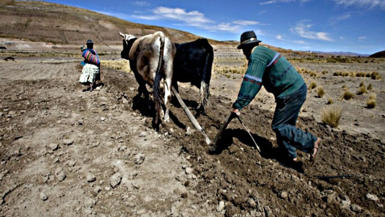 A couple of farmers tilling the ground in Toloma, Bolivia, on 2010