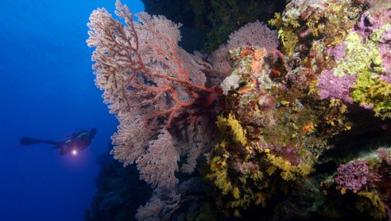 A deep dive near Australia's endangered Great Barrier Reef