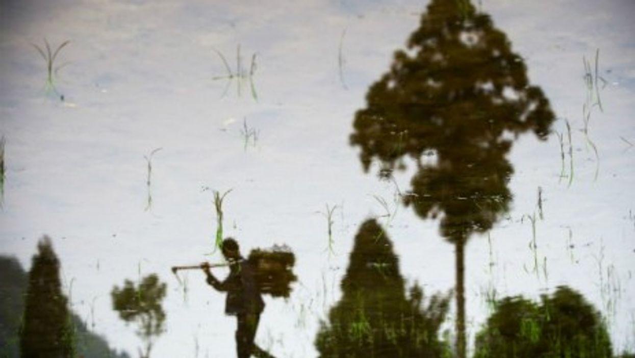 A farmer walks along a paddy field, as China enters plowing season.