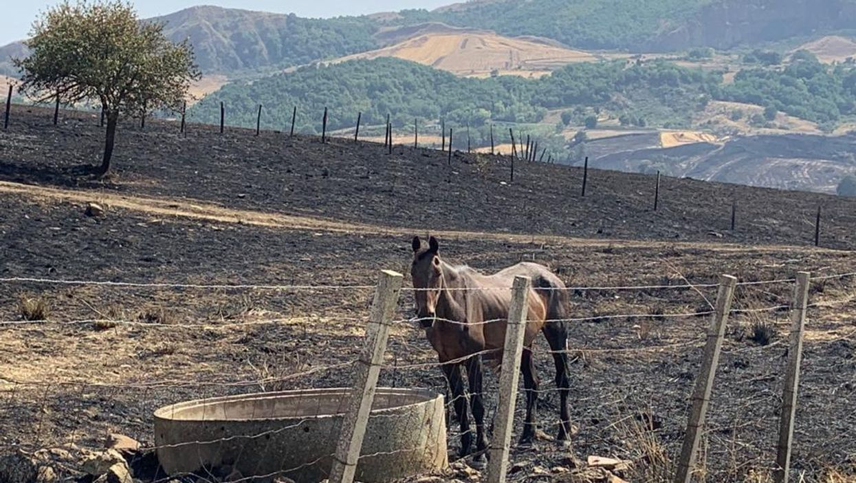 Record Drought & Heartbreak: Italy's Farmers Reap The Damages Of Climate Change