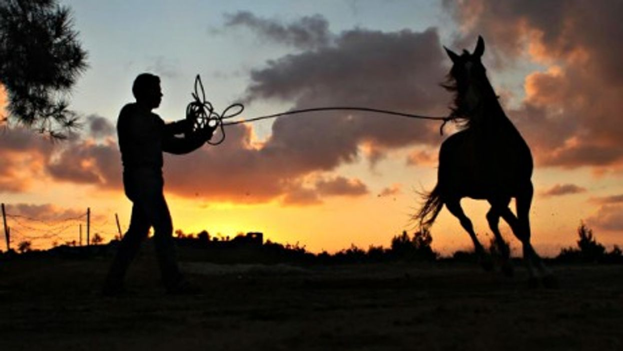 A Palestinian youth plays with his horse at sunset in the West Bank.