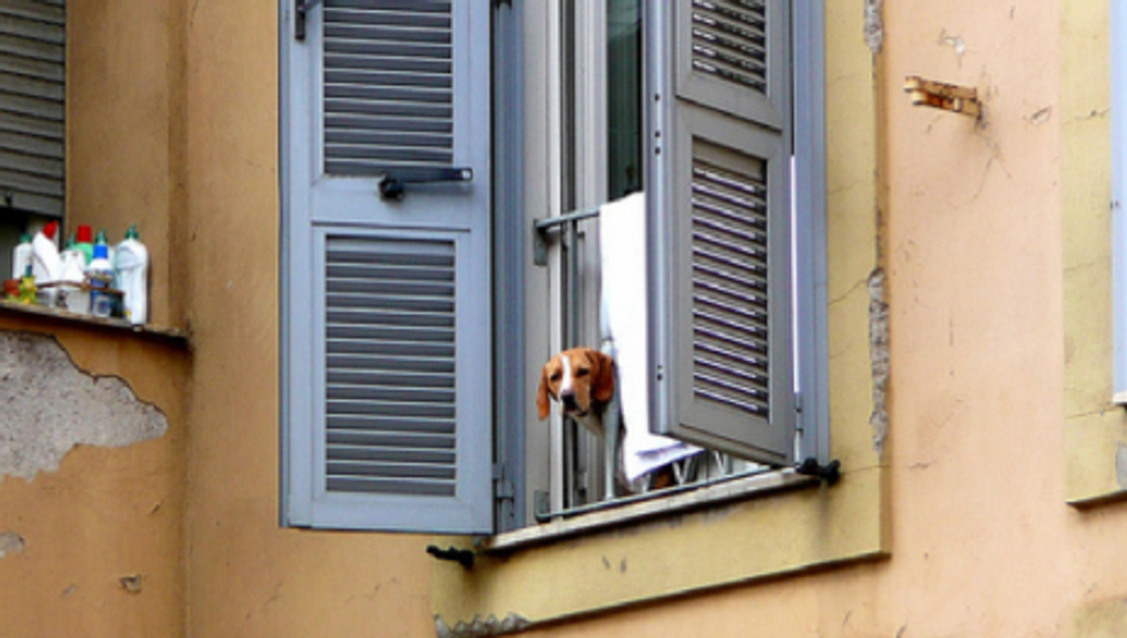 A pooch peers out from a Rome apartment (Metro Centric)