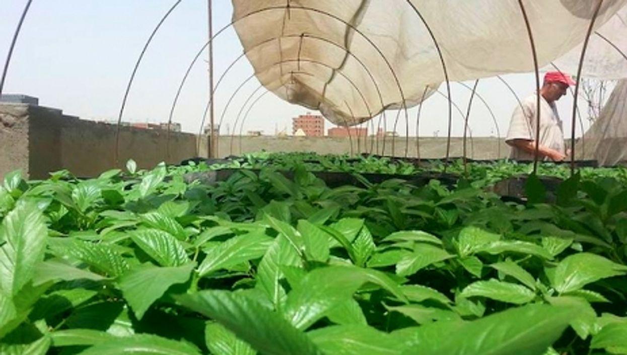 A rooftop garden near Cairo