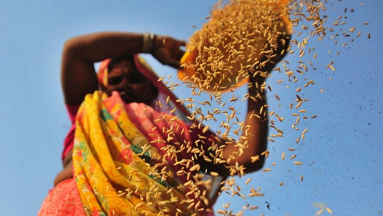 A woman farmer in India