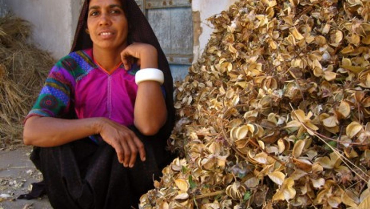 A woman from the Ahir tribe at Chapredi village with cotton husks (Meena Kadri)