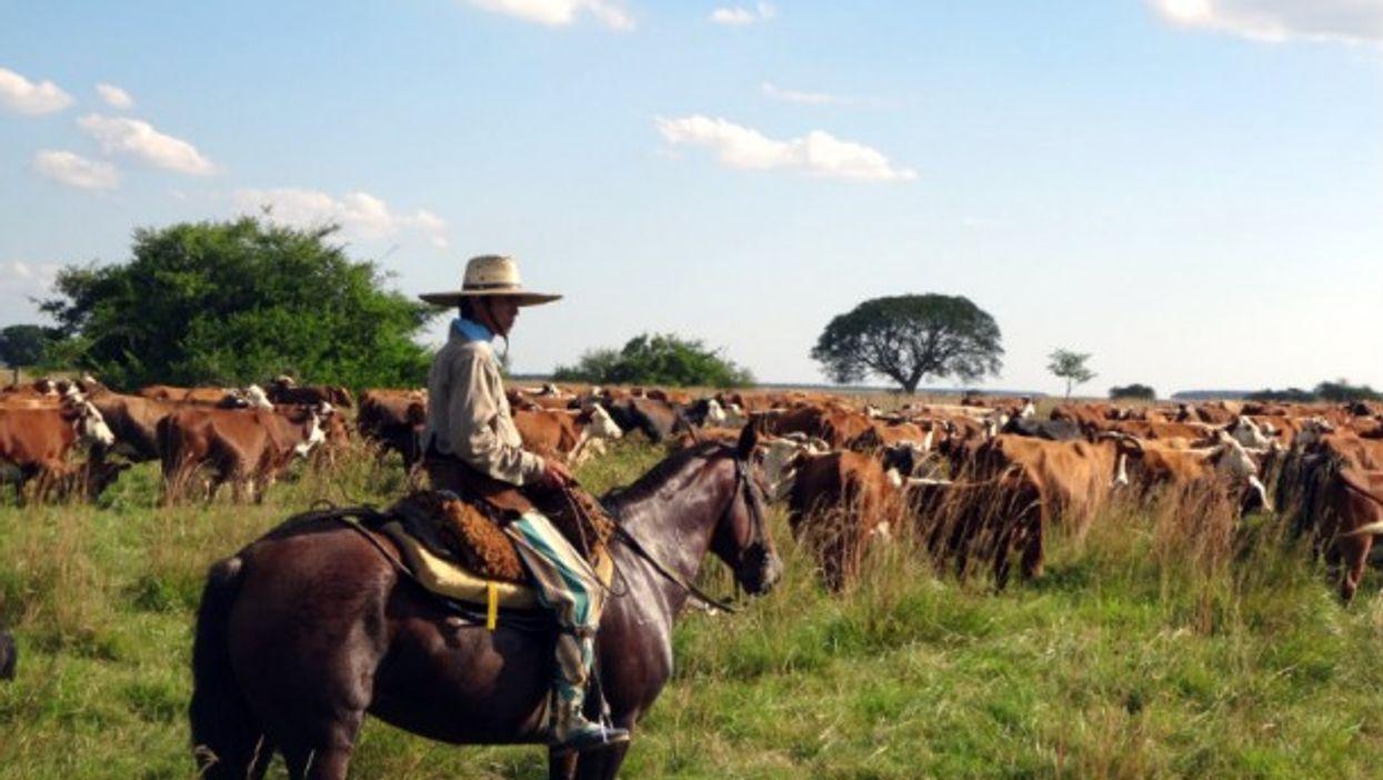 An Argentinean cattle farmer