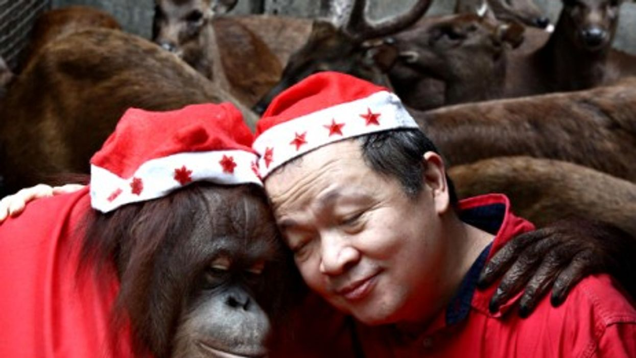 An orangutan hugs its caretaker at a Christmas party in a zoo in Malabon, Philippines
