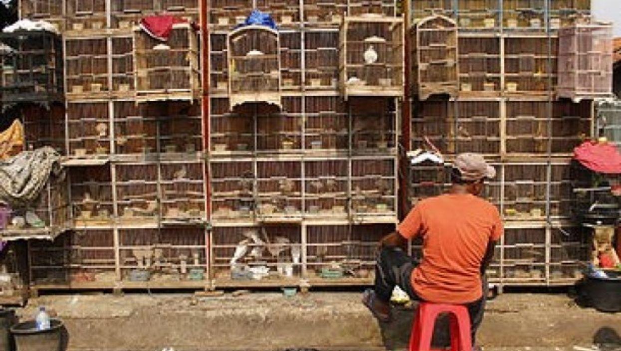 Animals for sale at a bird market in Jakarta