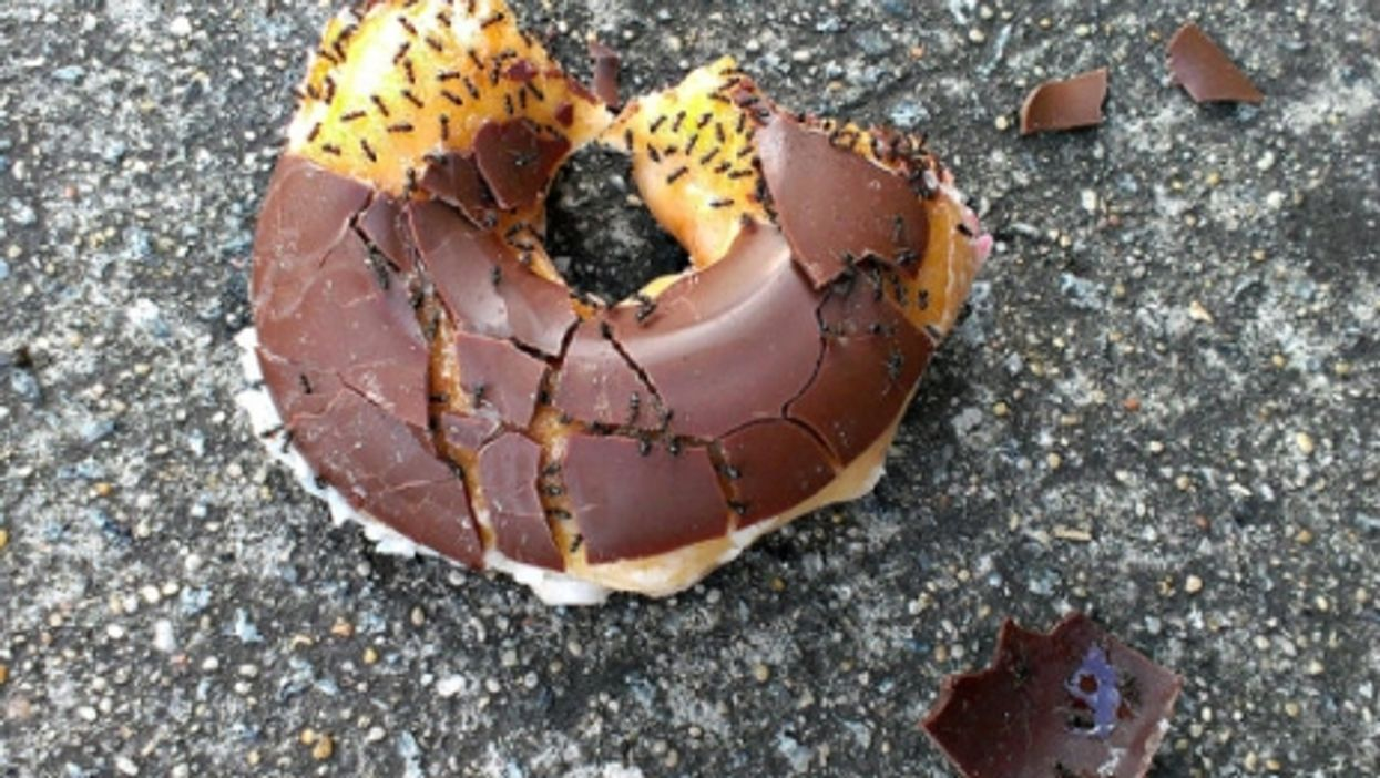 Ants on a doughnut.