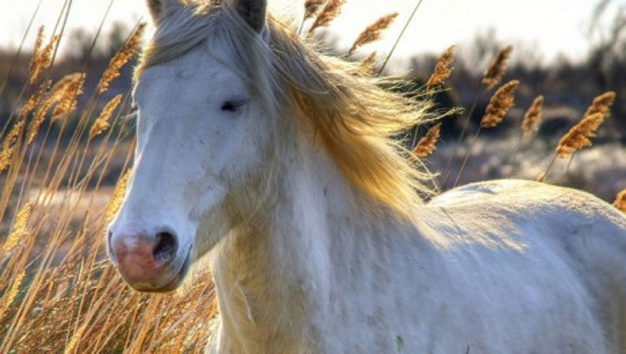 Are horses the key to good management skills?