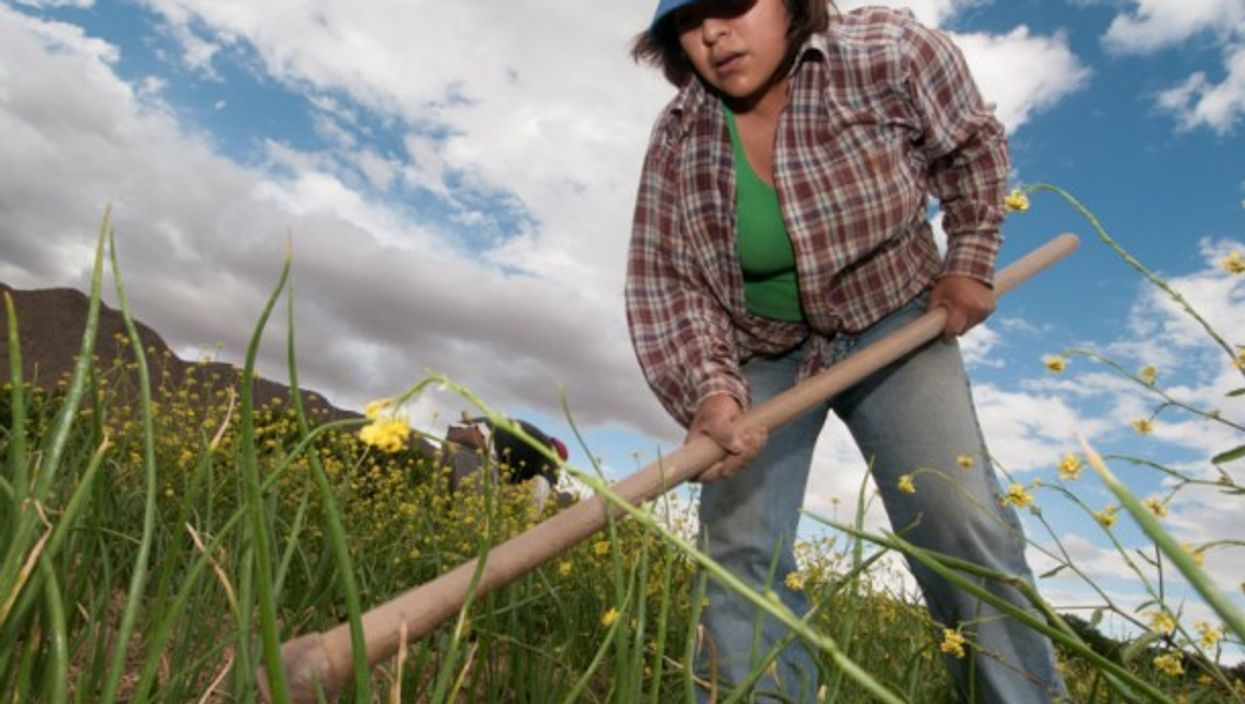 Argentinian native farmer works on onion fields with her husband