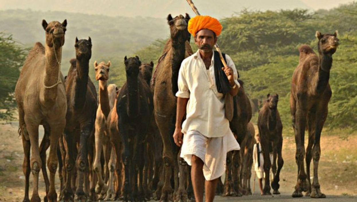 At India's Pushkar camel fair