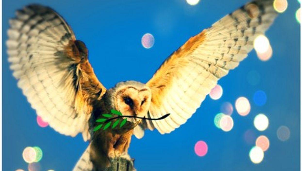 Barn owls for peace