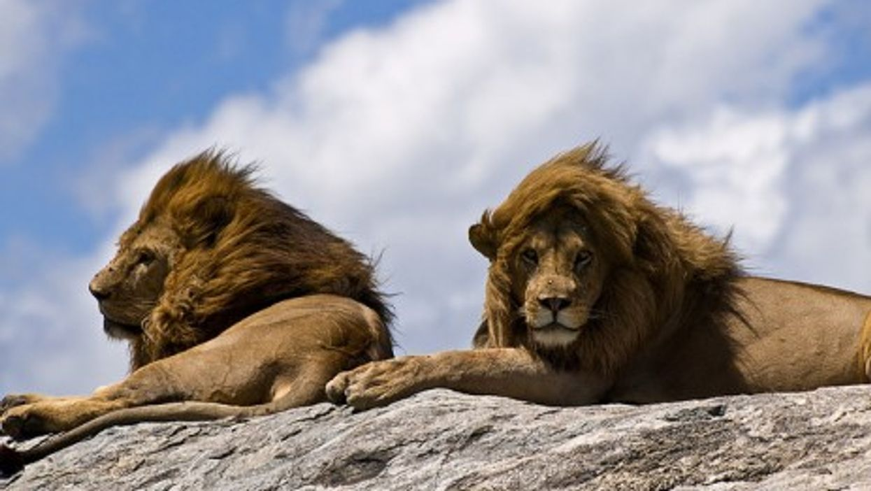 Basking in the sun, Serengeti National Park