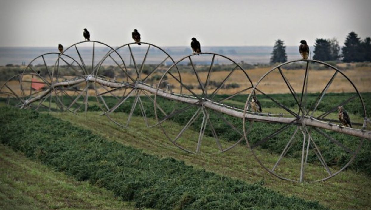 Birds keep track of these crops in Argentina