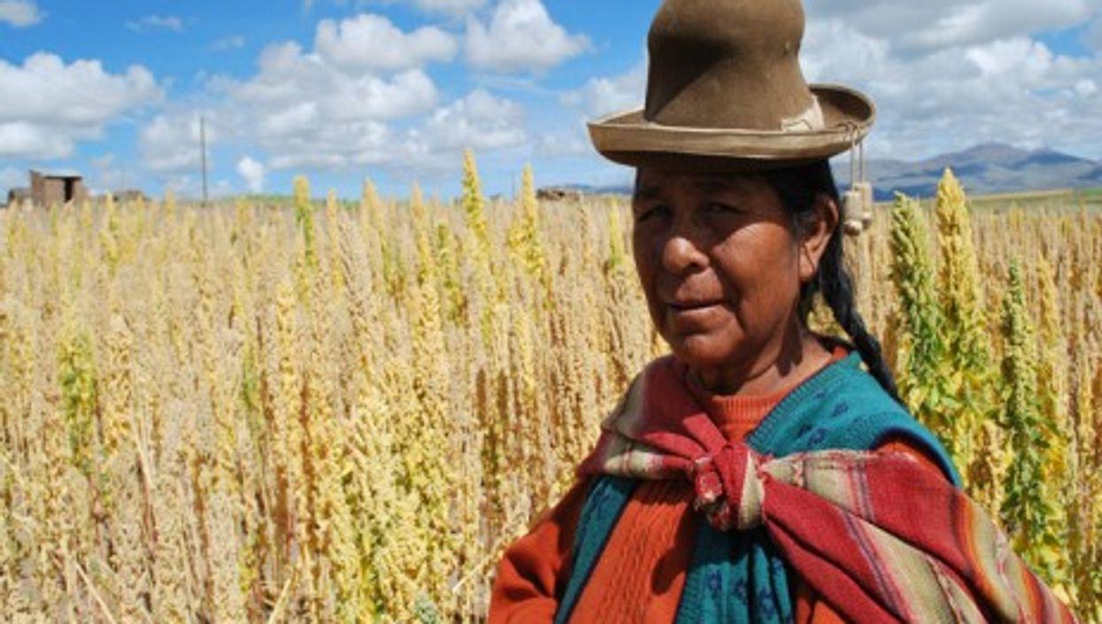 Bolivian farmer in her quinoa field