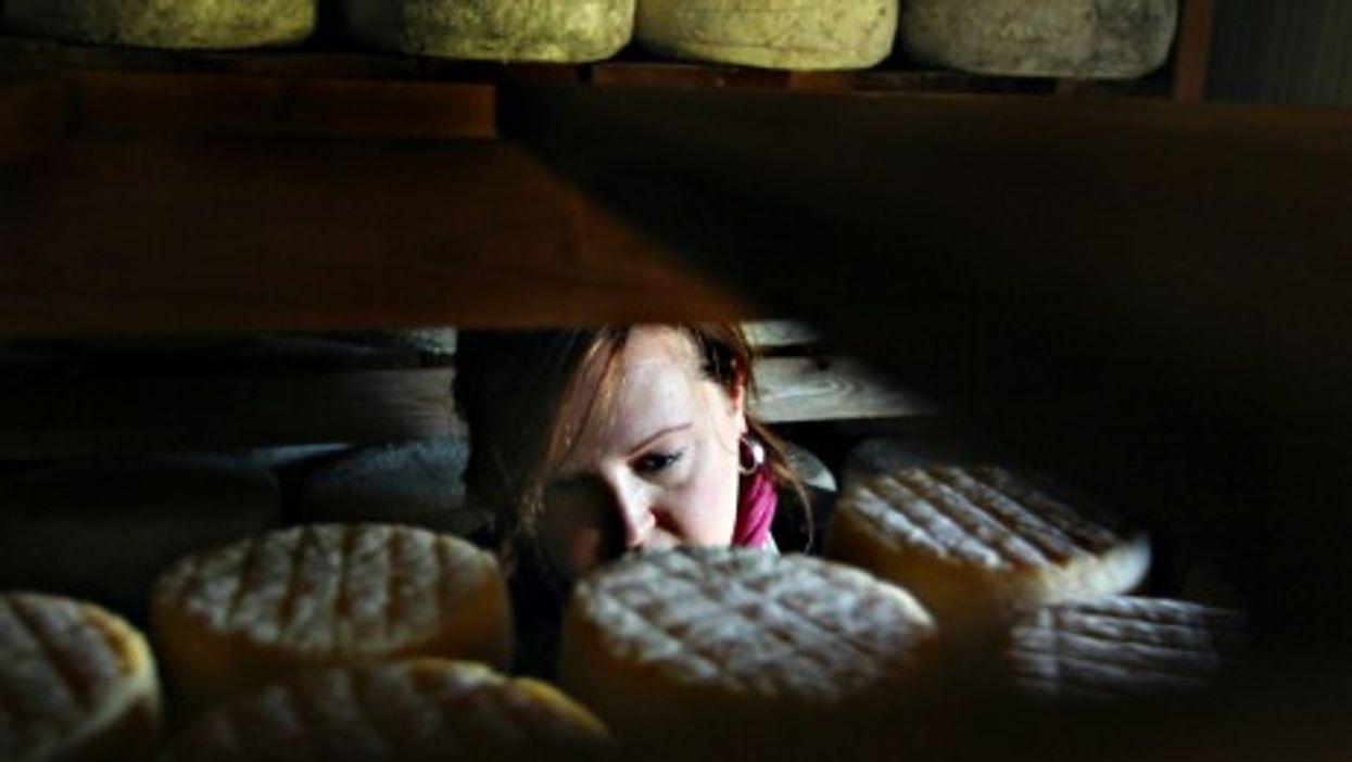 Californian Cheese Maker
