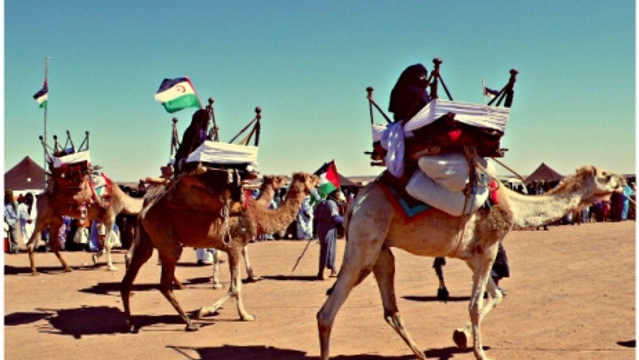 Camel exhibition in Dakhla