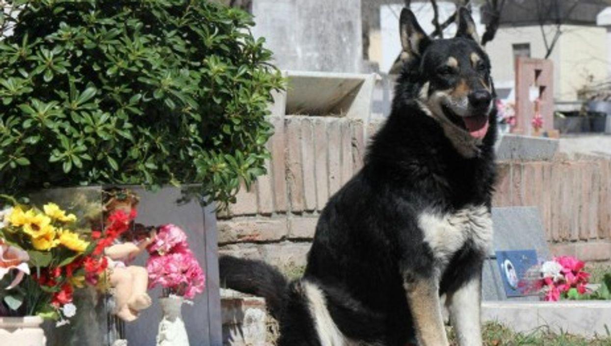 Capitan the loyal dog