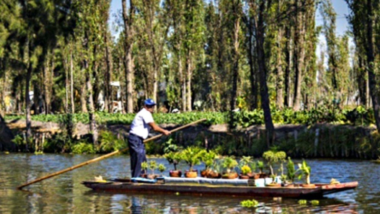 Chinampas in Xochimilco