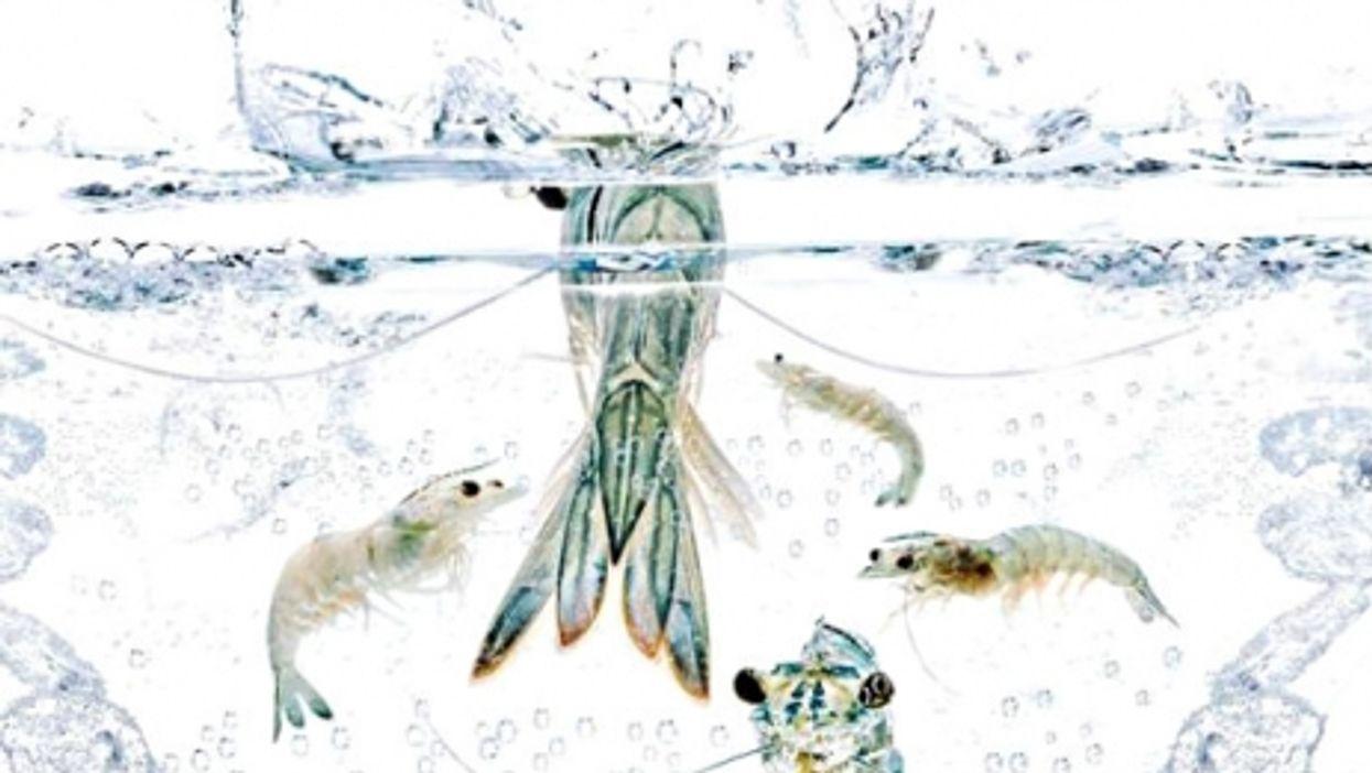 Clean waters?