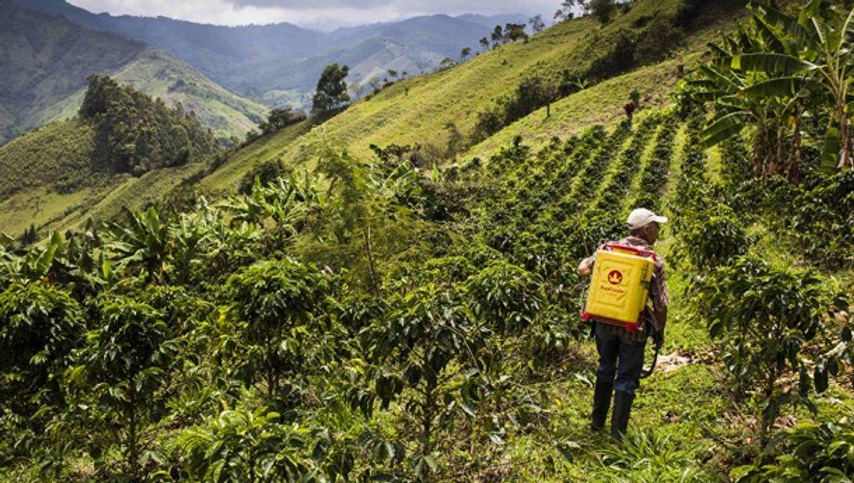 Coffee plantation in Caldas, Colombia
