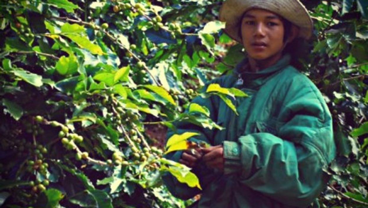 Coffeebean collector in Da Lat