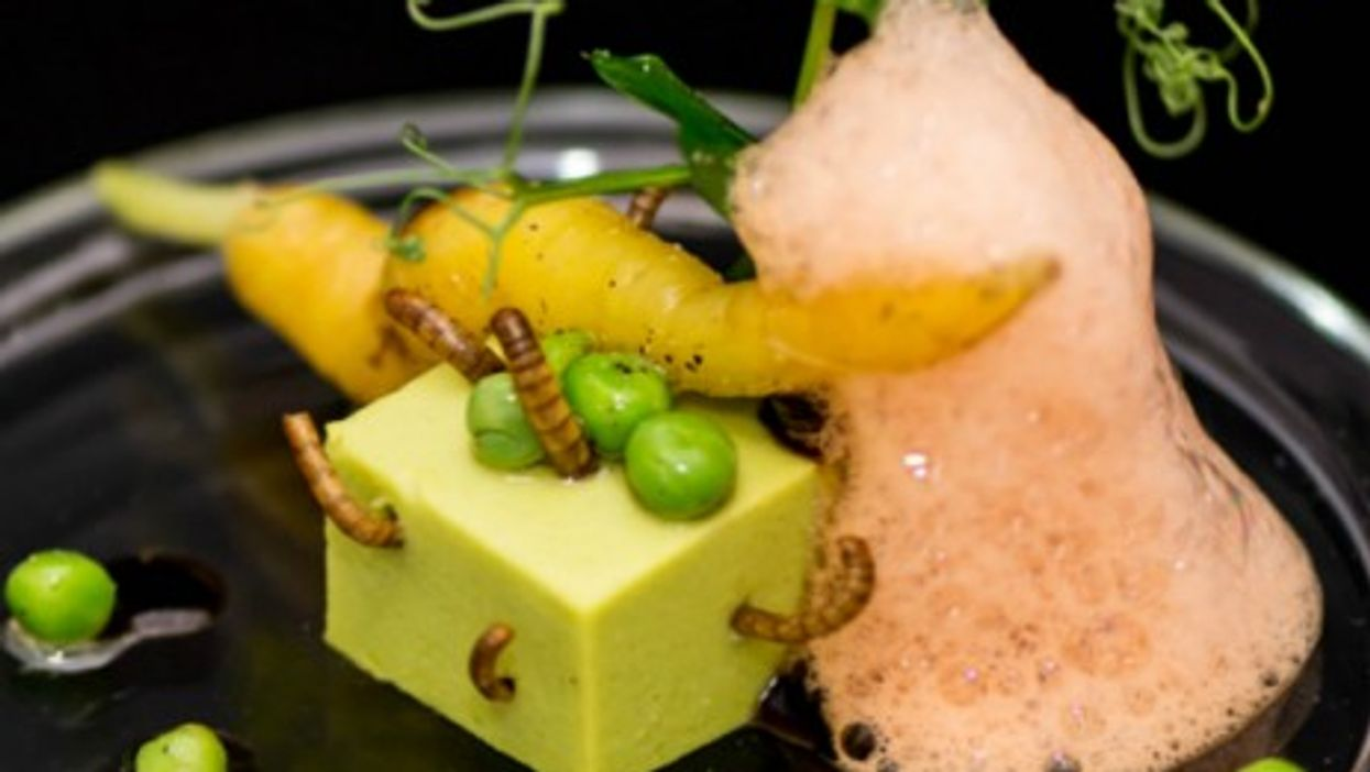 """David Faure's """"Small Square Peas and ecume of Carrots, Mealworms"""""""