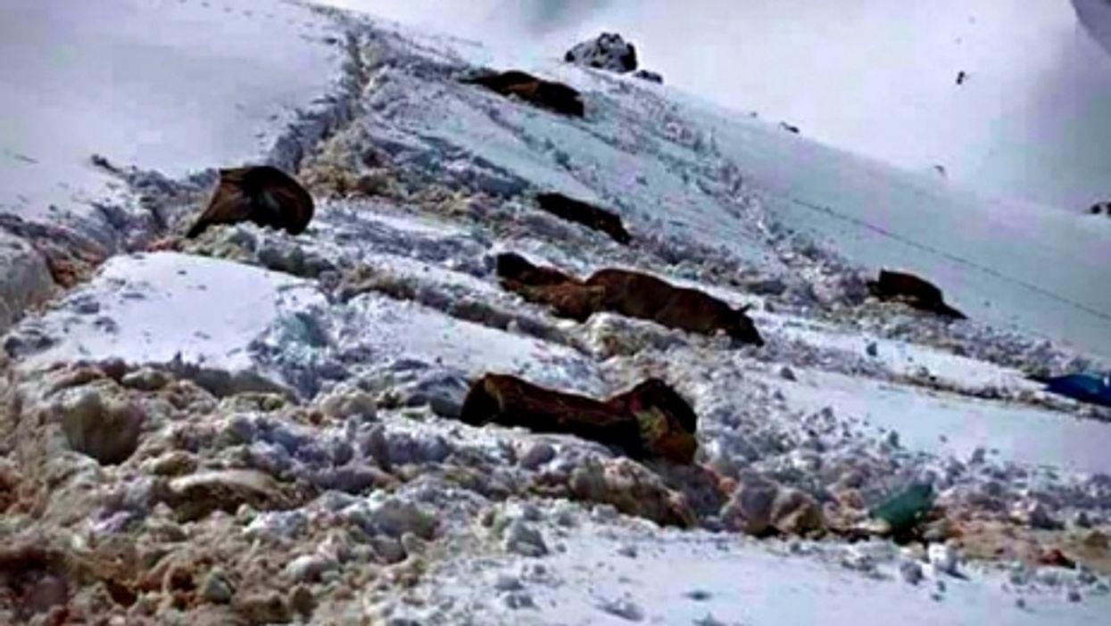 Dead mules near the Turkey-Iraq border