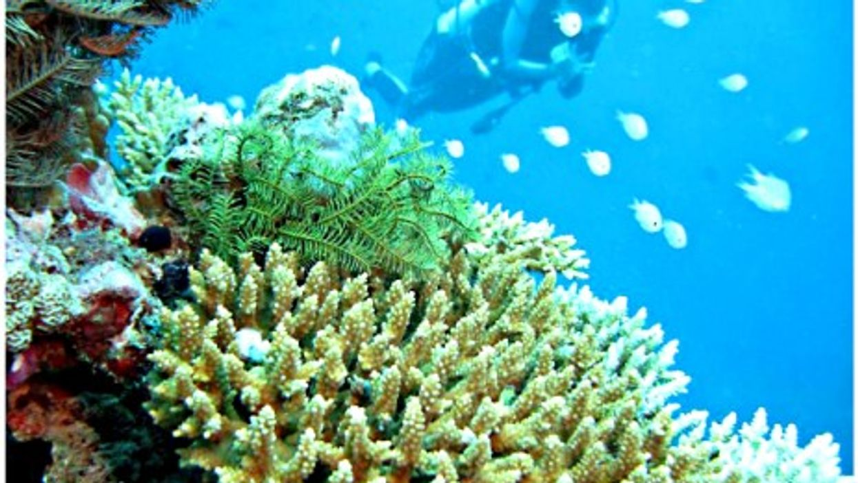 Diving near coral in the Maldives
