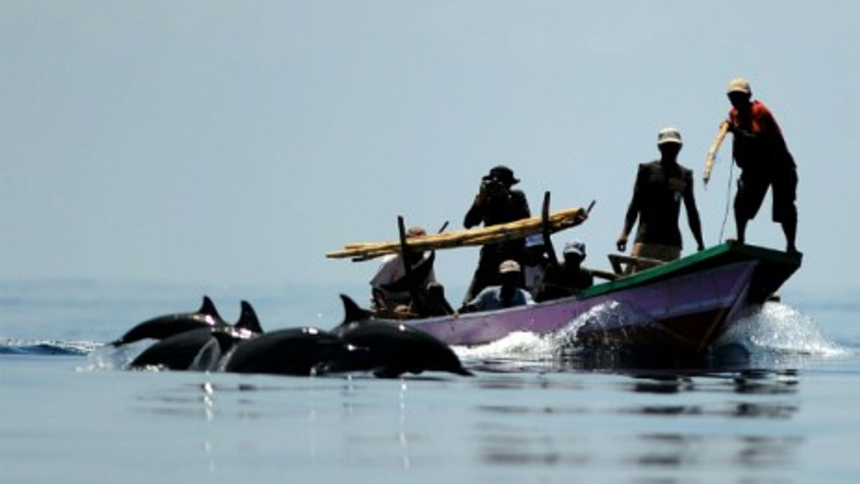 Dolphin hunters in Indonesia, Oct. 2012