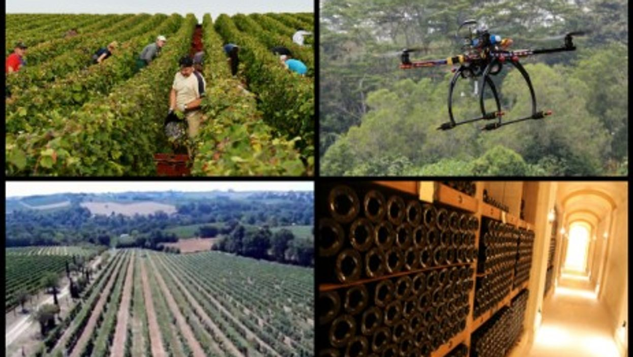 """""""Drones are more precise, they don't damage the vines like tractors do, and they have more flexibility"""""""