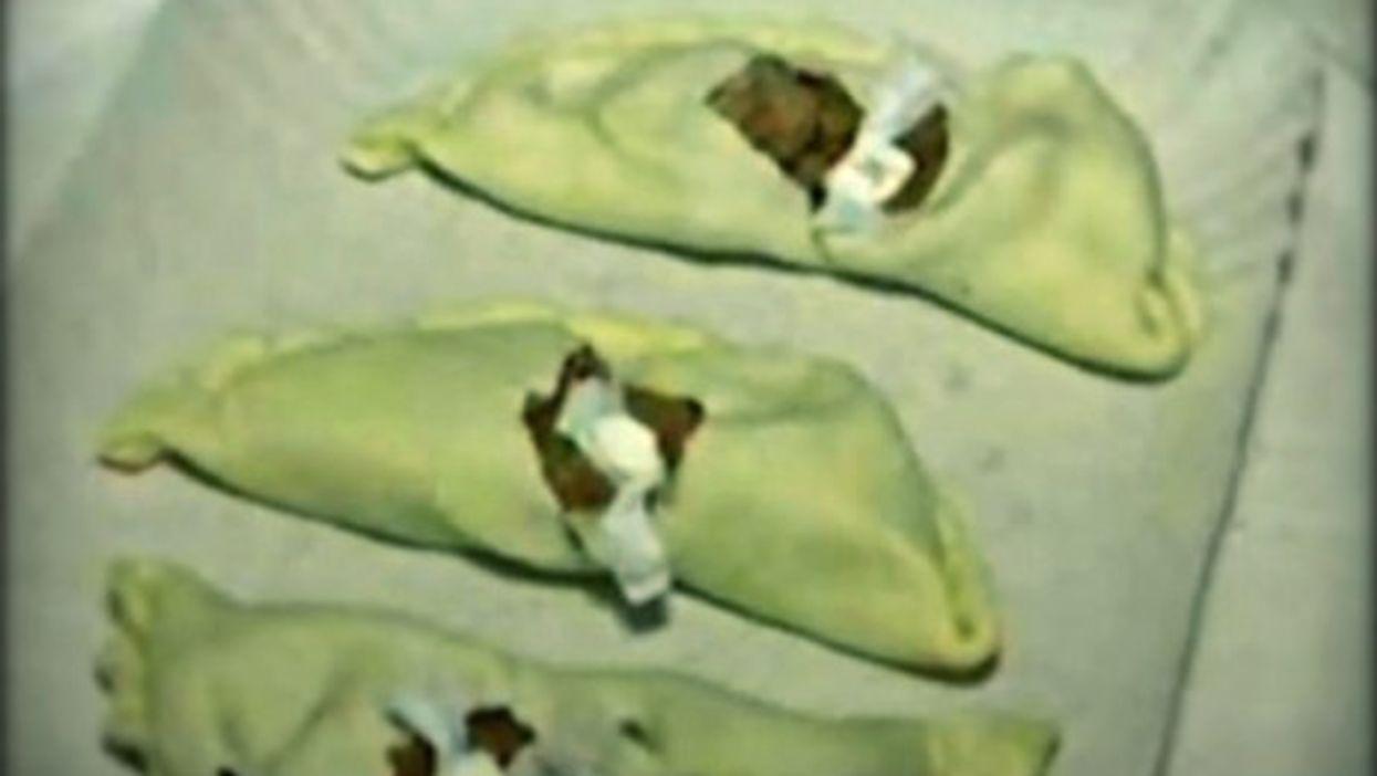Empanadas with a side of cocaine ...