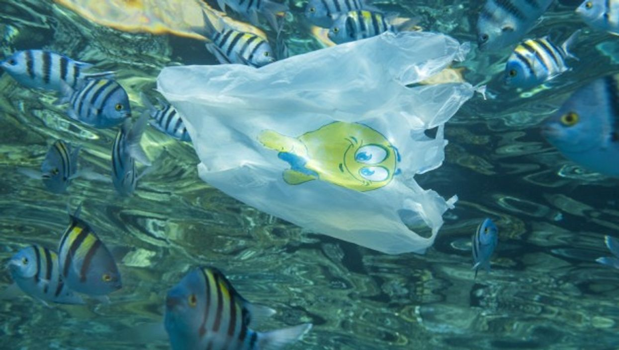 Every year, no less than 10 million tons of plastic waste are dumped into oceans