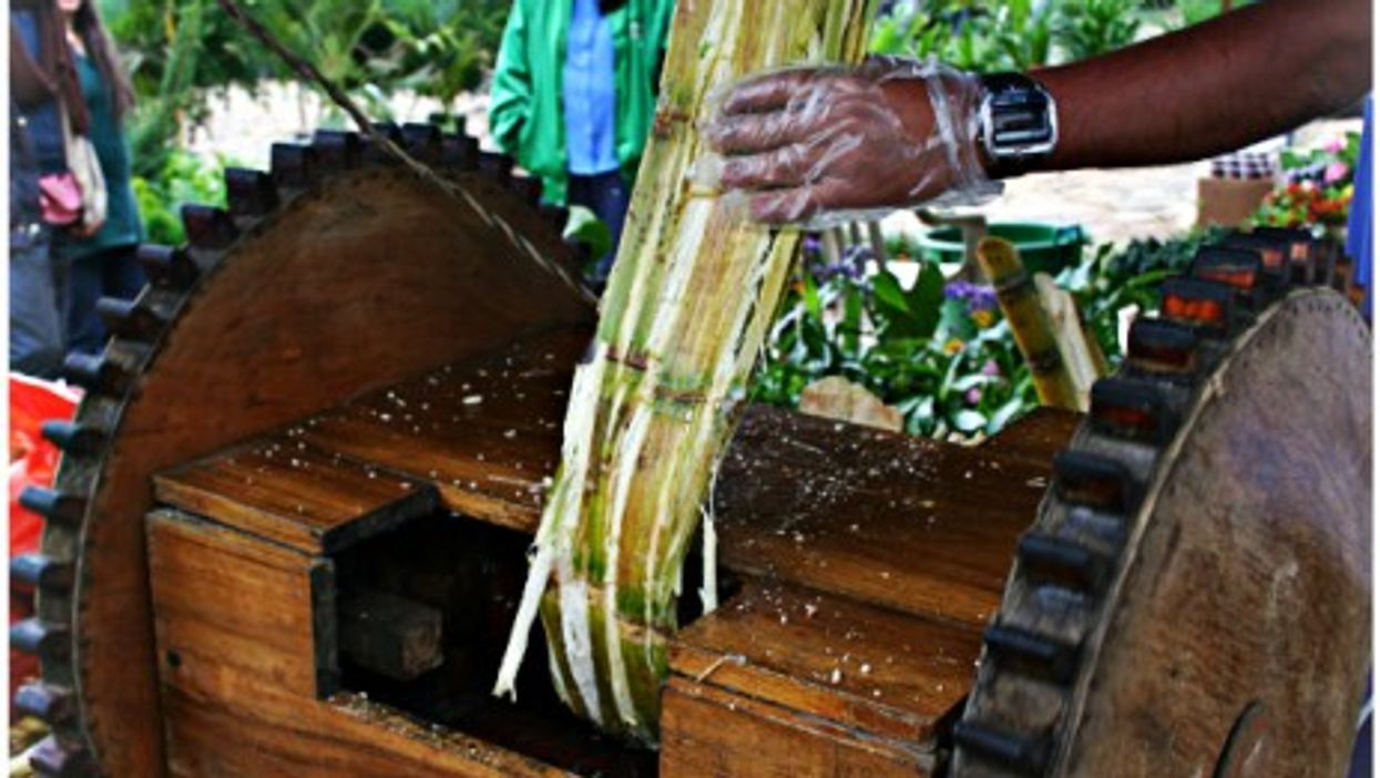 Extracting sugar cane juice in Colombia