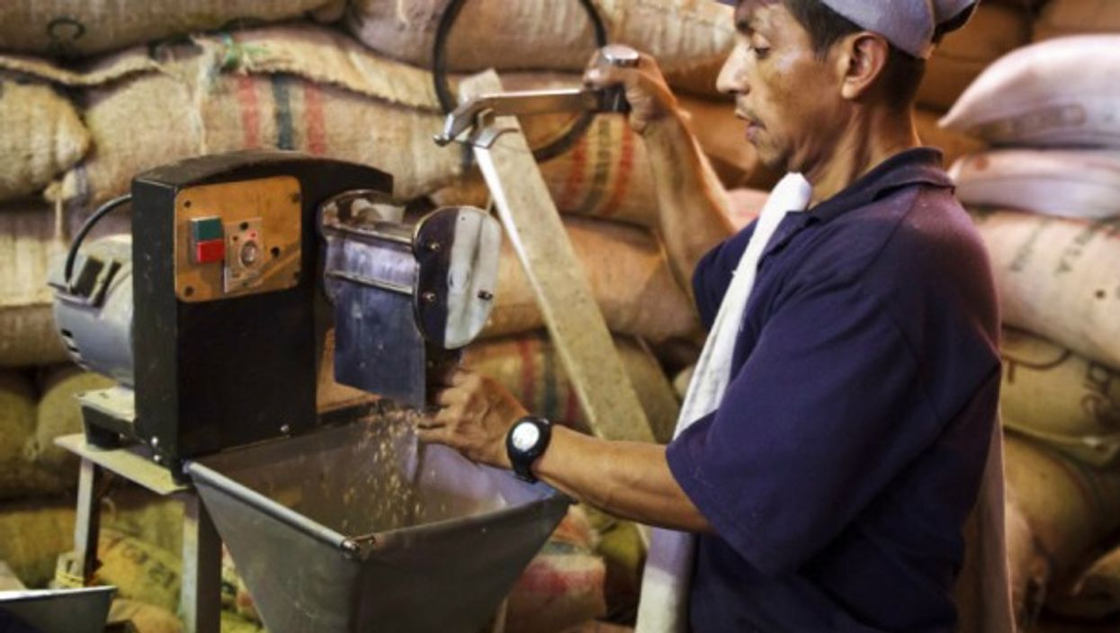 Farmer in process of drying and grinding coffee beans