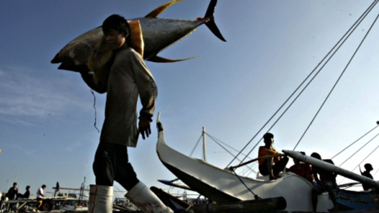 Fishing yellow fin tuna in General Santos City, Philippines