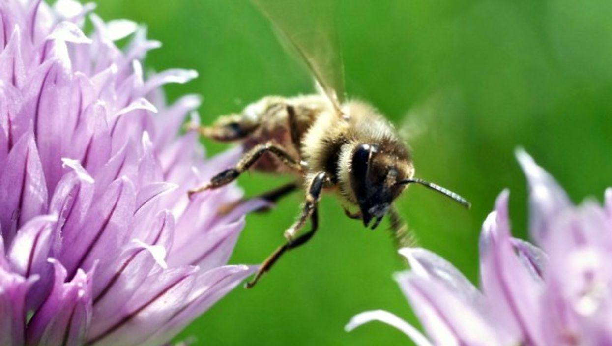Generating a lot of buzz