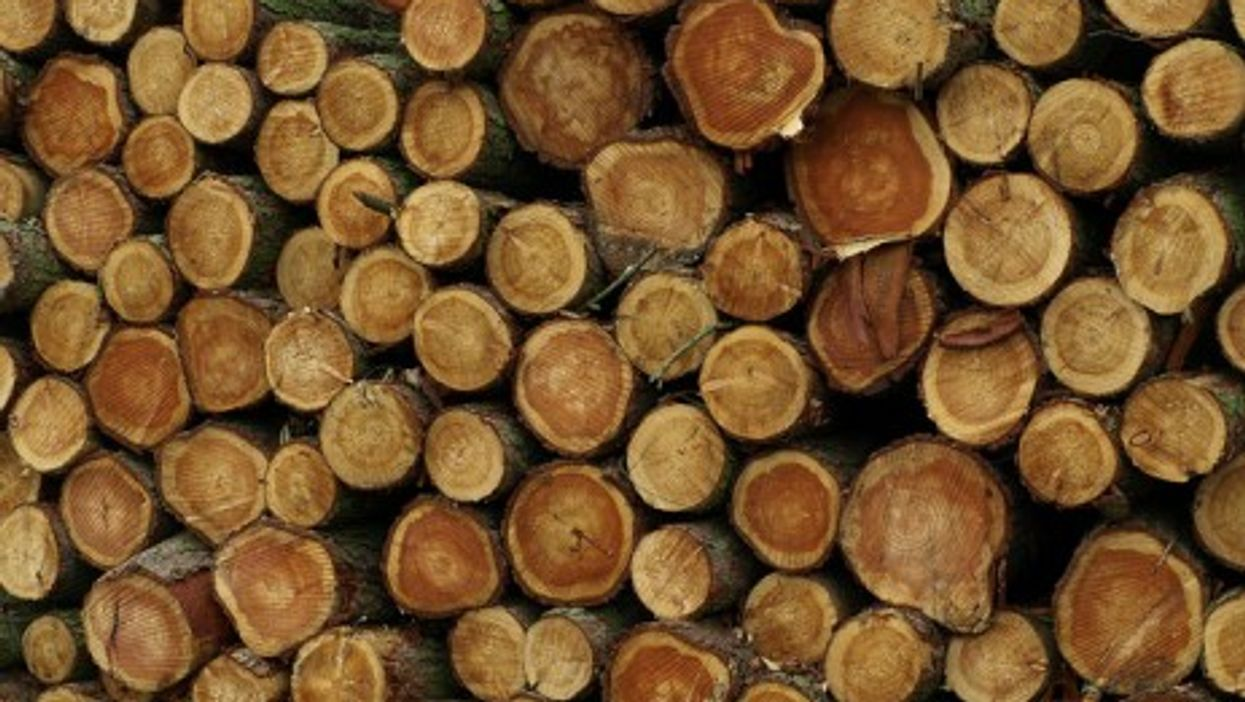 Germany imports 6 million cubic meters of illegal wood every year (DH Wright)