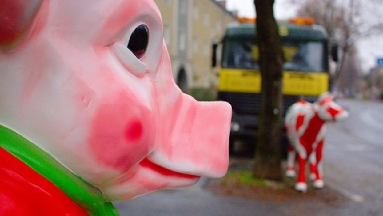 Germany's language police prefer cows to pigs