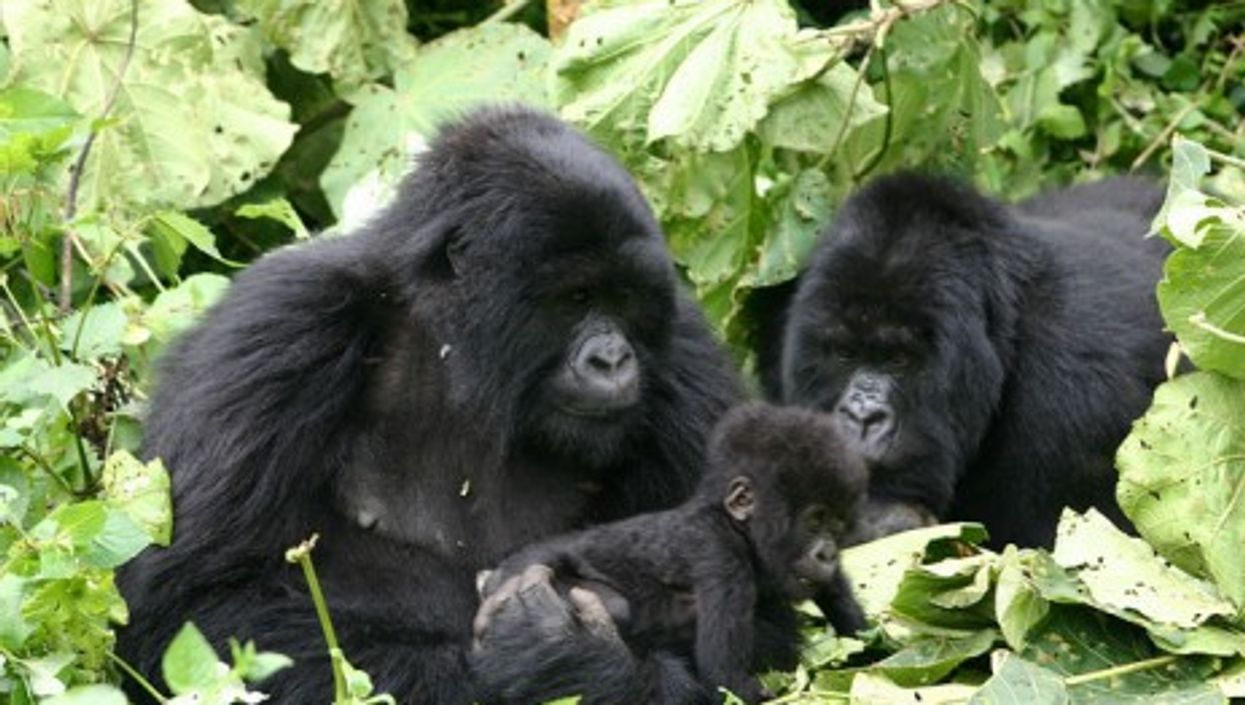 Getting close to our primate cousins (derekkeats)