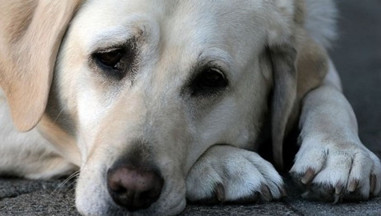 GPS trackers can help owners reunite with thier beloved dogs