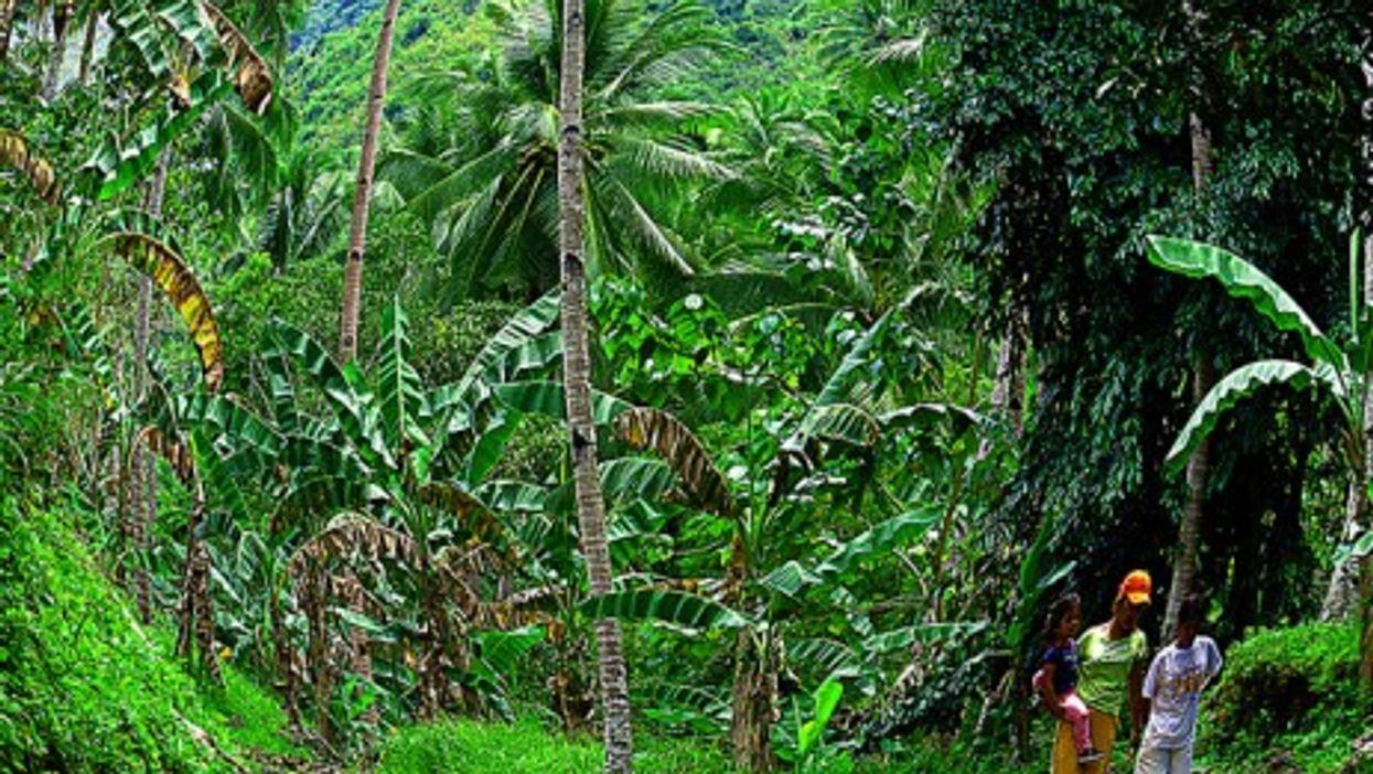 Green grows on the island of Mindanao