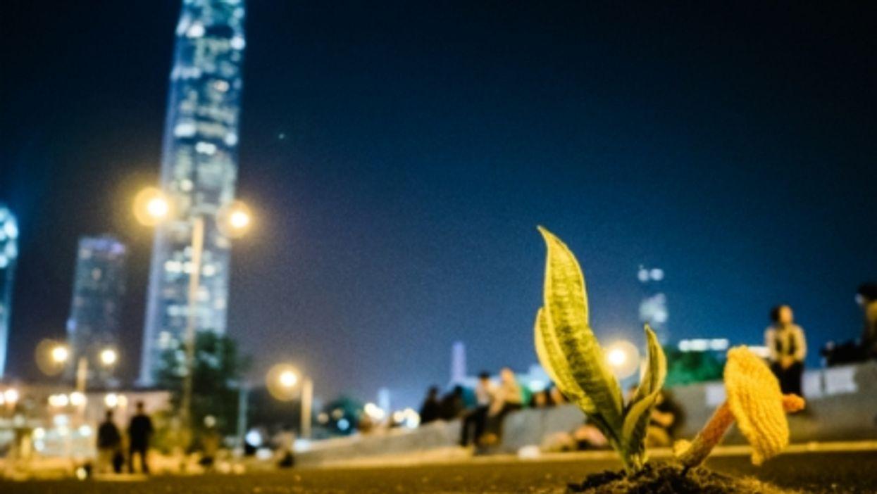 Growing in Hong Kong