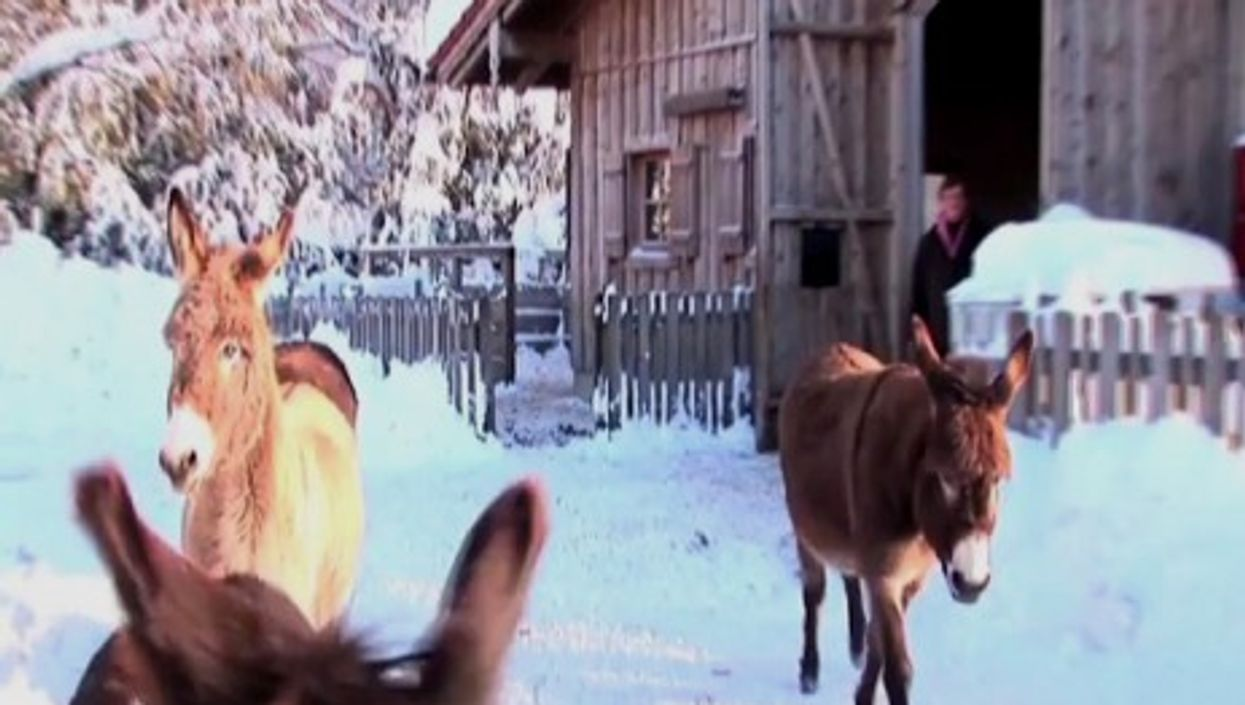 Gut Aiderbichl is an Austrian sanctuary for animals, including 50 donkeys.