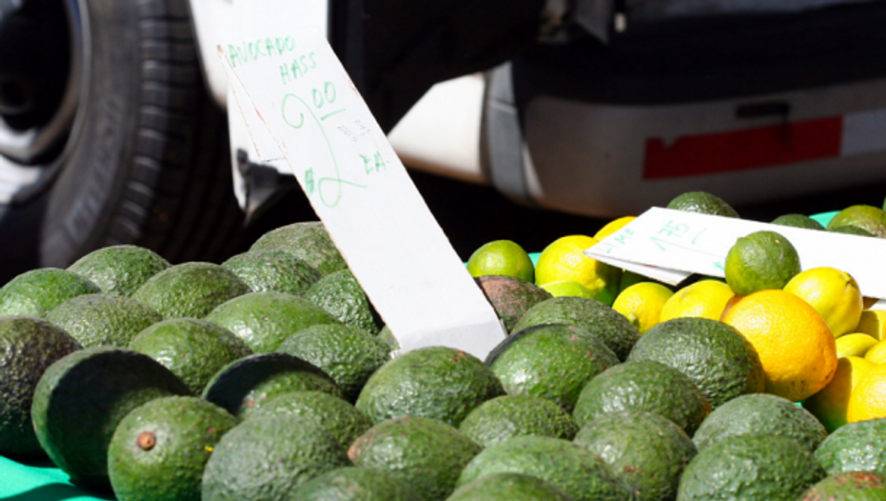 Hass Avocados for sale at a farmer's market
